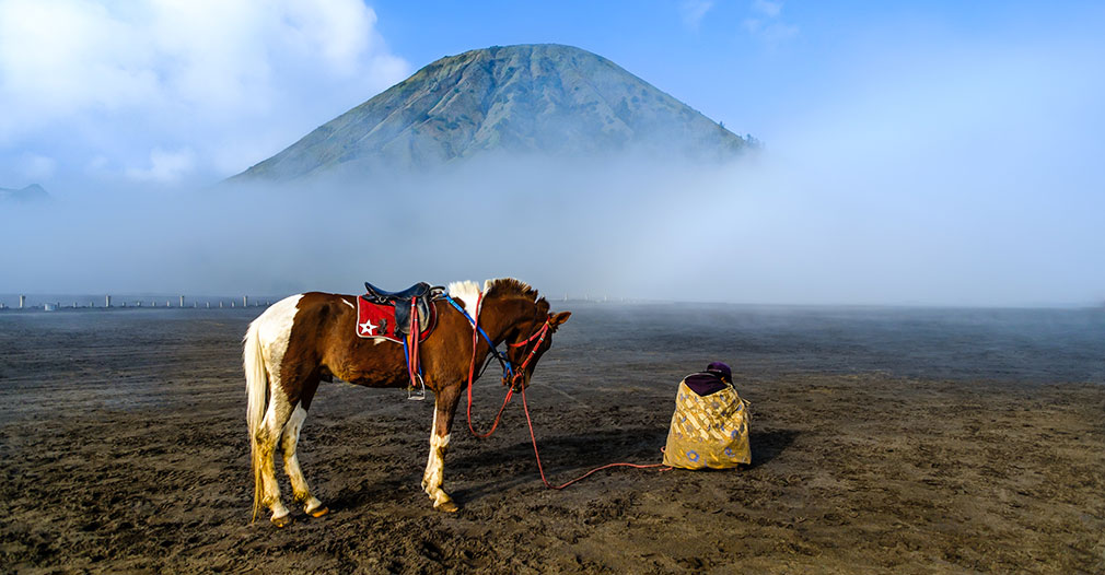 A javanese resting with his horse near Mount Bromo